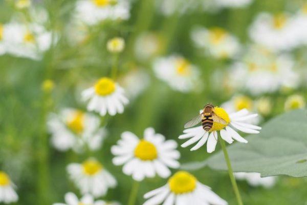 Wildbienenpatenschaft 2020