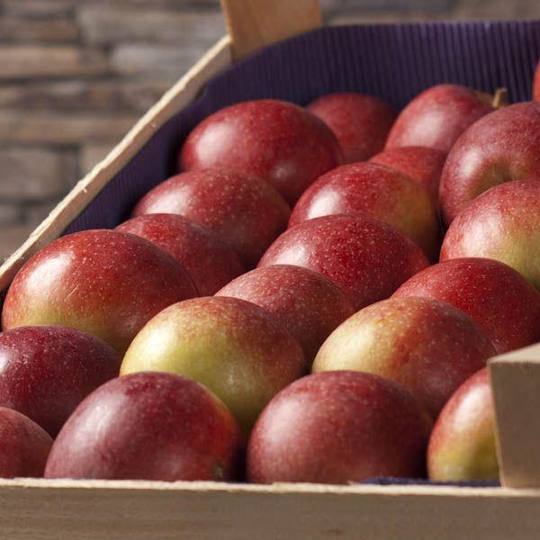 """Probierkiste """"Apfel&Birne"""" 8 kg"""